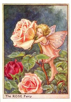 Illustration for the Rose Fairy from Flower Fairies of the Summer. The Rose fairy was first published in Flower Fairies of the Garden, Author / Illustrator Cicely Mary Barker Cicely Mary Barker, Fairy Dust, Fairy Land, Fairy Tales, Fantasy Magic, Fantasy Art, Fairy Garden Plants, Fairy Gardens, Fairies Garden