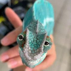 his chameleon is so cutee!😍😍 Currently, there are around 200 different chameleon species, 44 percentof which can be found on Cute Little Animals, Cute Funny Animals, Funny Pets, Funny Humor, Nature Animals, Animals And Pets, Cute Reptiles, Funny Lizards, Reptiles And Amphibians