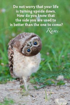 How cool is this photo of a Burrowing Owl? These owls from Washington are making their way to Canada, where the birds are endangered, to participate in the country's owl breeding program. Animals And Pets, Baby Animals, Funny Animals, Cute Animals, Funny Owls, It's Funny, Hilarious, Funny Humor, Beautiful Owl