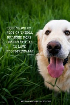 Dogs Teach Us Alot Of Things, But None More Important Than To Love Unconditionally - Dog Quote