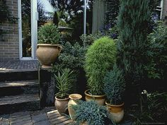 Evergreen patio pots.