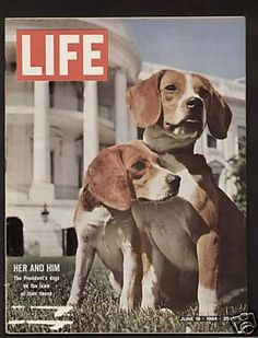 Life Magazine June 1964 The Presidents Dogs Beagles  - Found on Lookza.com  www.advintageplus.com