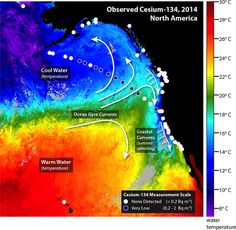 Traces of Fukushima Radiation Detected Off California Coast by Becky Oskin, Senior Writer   |   11/11/14 Circles indicate the locations where water samples were collected. White circles indicate that no cesium-134 was detected. Blue circles indicate locations were low levels of cesium-134 . . .