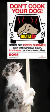 DON'T COOK YOUR DOG | Join the campaign & be a life saver.  if it's hot, leave them a home.
