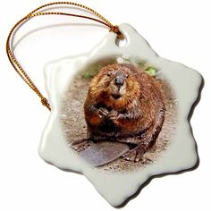 3drose Beaver Snowflake Porcelain Ornament, 3-Inch => Limited discounts available now : Christmas Ornaments