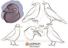 raven reference sheet by Kibbitzer on DeviantArt