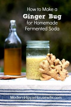 Homemade ginger beer a rewarding and nutritious treat. But first, you need to know how to make a ginger bug for homemade fermented soda! Kefir, Kombucha, Beer Recipes, Cooking Recipes, Homemade Ginger Beer, Ginger Bug, Ginger Food, Ginger Ale Recipe, Probiotic Drinks