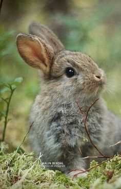 Looks sooo soft Cute Bunny, Cute Cats, Bunny Bunny, Nature Animals, Animals And Pets, Beautiful Creatures, Animals Beautiful, Cute Baby Animals, Funny Animals
