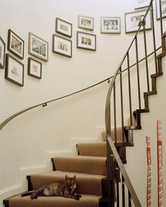 Photo gallery on curved stair wall