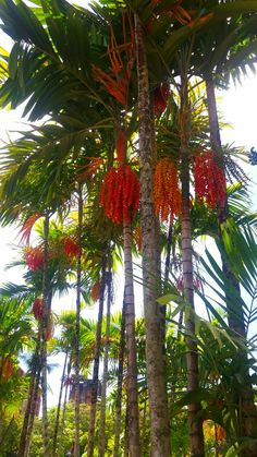 Indian Pics, Indian Pictures, Exotic Fruit, Exotic Flowers, Home Garden Design, Home And Garden, Pool Plants, Tropical Gardens, Color Shapes
