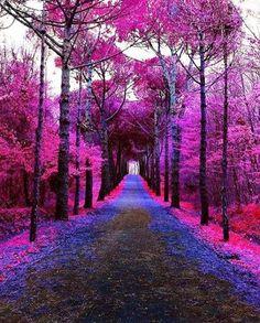 AtatürkArboretum Sarıyer, #Istanbul Province, Turkey. All Nature, Green Nature, Nature Images, Nature Pictures, Amazing Nature, Fantasy Art Landscapes, Fantasy Landscape, Beautiful Landscapes, Beautiful Nature Wallpaper