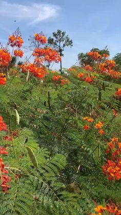 Texas Landscaping, Landscaping Plants, Front Yard Landscaping, Xeriscape Plants, Flower Landscape, Landscape Design, Birds Of Paradise Plant, Dubai Miracle Garden, Drought Tolerant Landscape