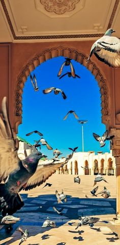 Visit Hassan II Mosque, Africa's largest mosque.