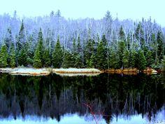 12.18.2015.Harrietstown Marsh Trail, dec 16, 2015, 915am.