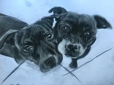 Best of friends #charcoal #drawing #art