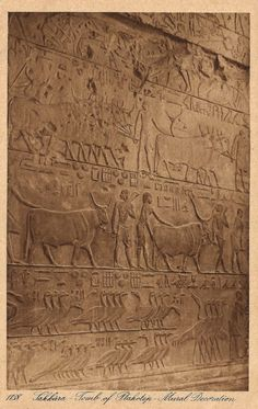 The Vintage Postcard 1910s Egyptian Ancient Tomb of Vizier Ptahhotep Mural Decoration at Saqqara by Lehnert & Landrock.
