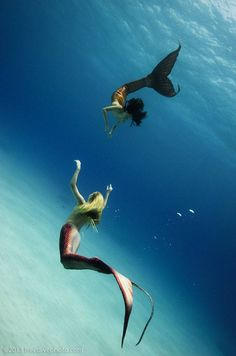 Mermaid Neri, photo by Kurt Chambers Mermaid Cove, Mermaid Diy, Real Mermaids, Mermaids And Mermen, Mythical Creatures, Sea Creatures, Professional Mermaid, Silicone Mermaid Tails, Sea Siren