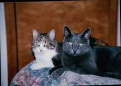 9 Tips you can do to help your Senior Cat - Senior Cats need more care