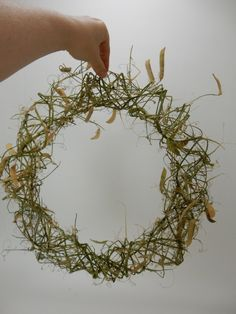 Dried Lathyrus wreath ready to design with