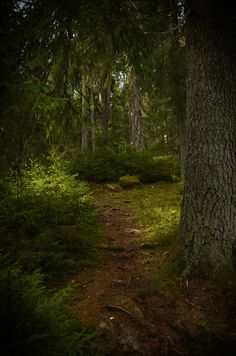 "silvaris: ""Forest background by Conny Sjostrom """
