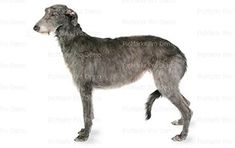 12 Sheet  Scottish Deerhound Edible CakeCupcake Party Topper >>> Be sure to check out this awesome product.