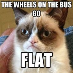 Grumpy Cat 1 - the wheels on the bus go flat