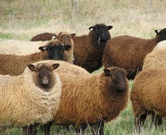 Want to buy natural fiber but not sure where to look? Look no further than this free directory and support your local farmers and shepherds!