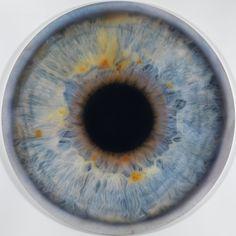 "Marc Quinn ""IRIS (We Share Our Chemistry With the Stars JG 200R)"" (2010)  Óleo sobre lienzo. Medidas: 200cm de diámetro"
