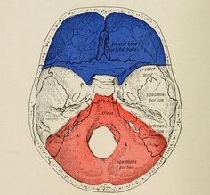 Red, white and blue. Atlas and text-book of human anatomy. 1914.