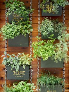 Do you want to grow herbs all year long? You can do it in your garden using hanging garden. Hanging garden is essential in a home, from supply when need herbs for cooking to beautifies your home. All of that can be achieved with hanging garden. Vertical Vegetable Gardens, Vertical Garden Diy, Vegetable Garden Design, Vertical Planter, Vegetable Gardening, Herb Garden Pallet, Jardim Vertical Diy, Diy Jardin, Walled Garden