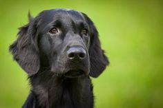 Trouble Training Your Dog? Follow These Tips * Want to know more, click on the image.