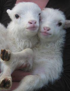 omg i want them!!!