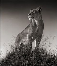 Absolutely gorgeous ..such power and strength ..so magestic ..#amazing