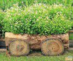Restos de troncos de árvores podem ser usados de diferentes formas no seu quintal. Aqui eles foram utilizados como minijardim!