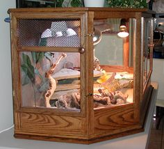 Bearded dragon cage, my brother would love this!