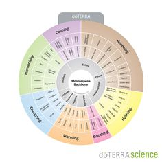 The Oil Properties Wheel is a tool designed to help our Wellness Advocates better understand the chemistry behind essential oils.