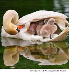 Best of motherly love – The kids just want to hide from the cold, only the mother can help give them warmth and love.