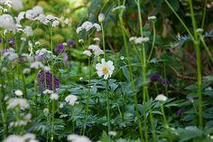 Anemone & Valerian Dream: Dan's Garden — Dan Pearson Studio