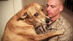 TRY NOT TO CRY: Dogs Meet Their Owner After Long Time II [NEW] (HD) [Fun...