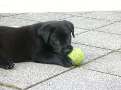 Play with me, please!!!!!!!!!!!!!!!!