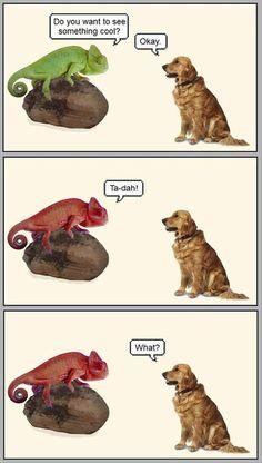 funny animals (21)