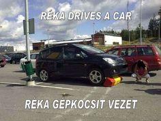RÉKA DRIVES A CAR   RÉKA GÉPKOCSIT VEZET  (HUMOR) by Gyula Dio  via slideshare