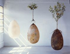 The Capsula Mundi is planted into the earth just as you would a seed and a tree is planted directly on top. The idea is that the larger the tree grows the more its roots will envelope the egg-shaped capsule as it decomposes. The tree will then serve as a memorial for the deceased as opposed to a tombstone.