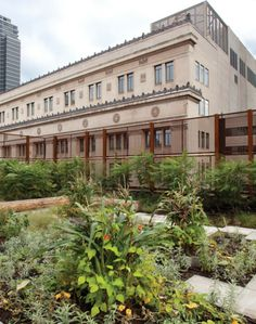Native Child and Family Services of Toronto / Levitt Goodman Architects