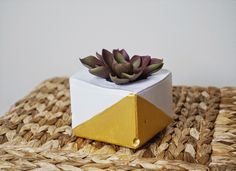 theDIYdiary: Do It Yourself: Concrete Planters