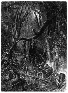 """Selva,"" or tropical forest of south America. Émile Bayard, from La terre à vol d'oiseau, by Onésime Reclus, Paris, 1886. (Source: archive.org)"