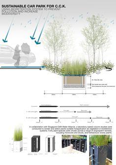 Cross Section of Bioretention