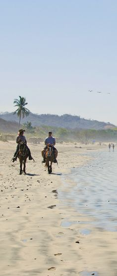 Ride the beach on #horseback while at Safari Surf School in Costa Rica.