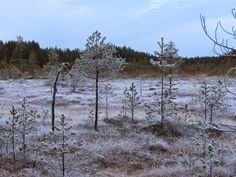 Soljanen, Seitseminen National Park.   Finnish nature through my eyes - Sari Lapikisto