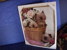 Clearance Home decor picture Cats in Basket framed by HuntWithJoy,